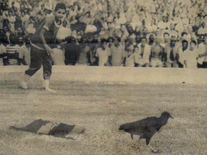 urubu_1969